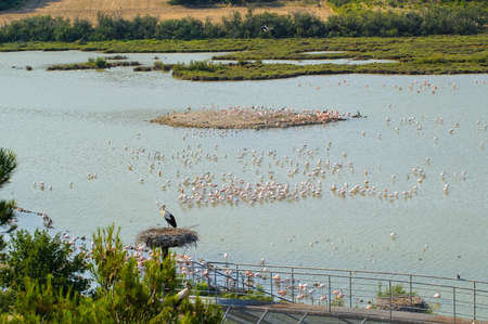 Big Lake in Sigean with big birds