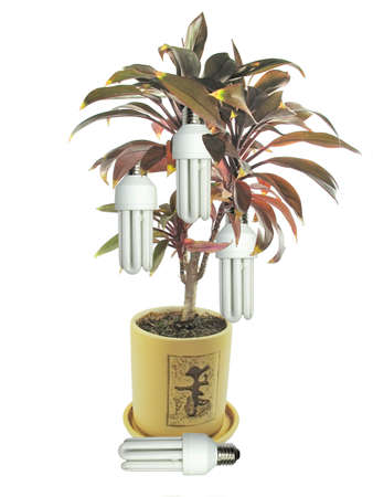 Ecological concept lamp bulbs growing on a tree Stock Photo - 3255493