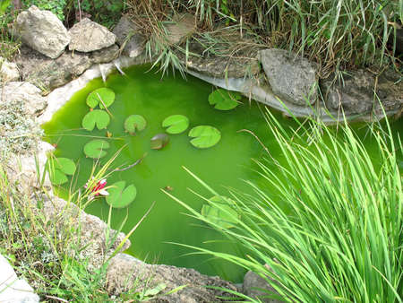 Little decorative garden pond as landscaping design element photo