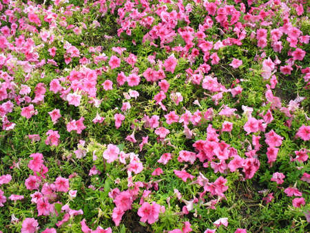 colorful bright flower bed in the garden Stock Photo - 3498263