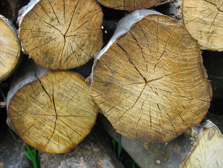 Stacked old yellow wood tree firewood logs Stock Photo - 9497248