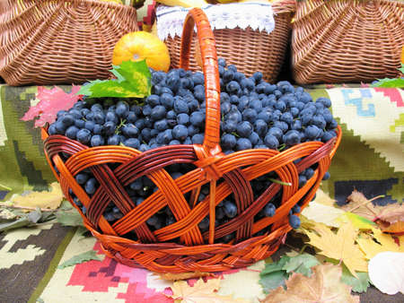 Grapes in the basket. Grapevine over carpet and leaves background  photo