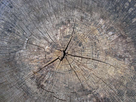 Old cracked tree stump wood texture abstract grunge background