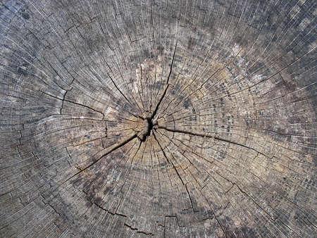 Oude gebarsten boomstronk houtstructuur abstracte grunge achtergrond