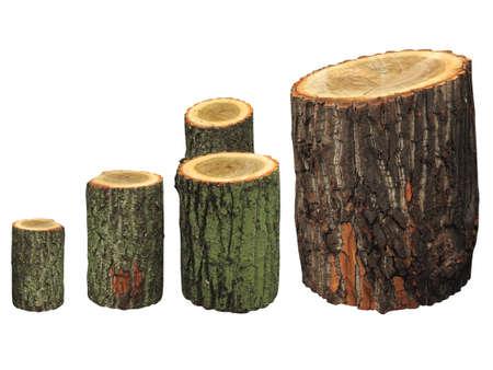 tronco: Birch logs madera aisladas sobre fondo blanco