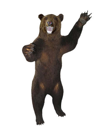 angry bear: Growling angry brown bear isolated over white background