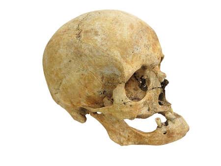 cranium: Old archaeological find human skull cranium isolated on white