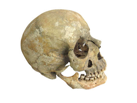 cranium: Old archaeological find human skull cranium isolated on white background