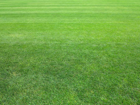 perfect striped lawn green fresh grass background Stock Photo