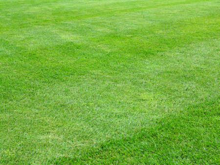 perfect striped lawn green fresh grass background Imagens
