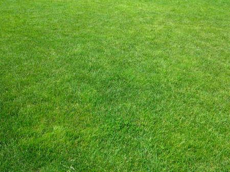 Green grass background green lawn pattern textured background. Stock Photo