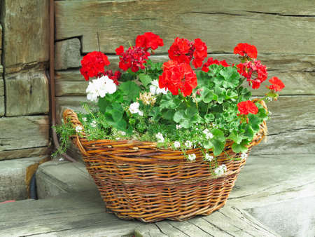 basket with flowers on a background of nature in the countryside