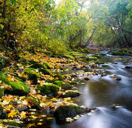 estonia: River with yellow leafs and green mossy stones Stock Photo