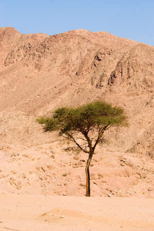mountin: Desert in Sinai
