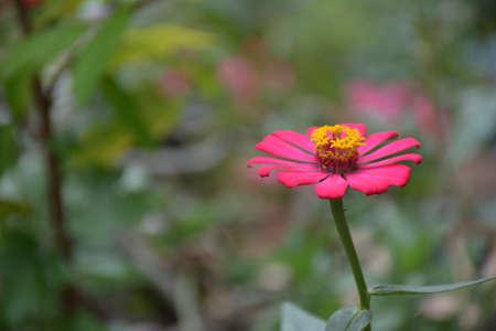 Red flower found in Thailand Stock Photo