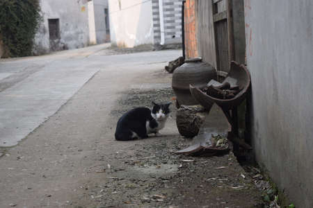 back alley: Cat at a back alley