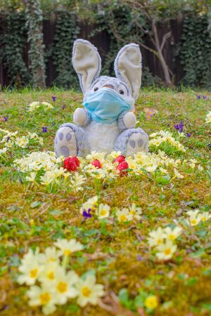 Easter 2020 concept during Coronavirus COVID-19 worldwide pandemic with Easter bunny wearing a medical mask and colorful spring flowers in the garden. Selective focus Foto de archivo