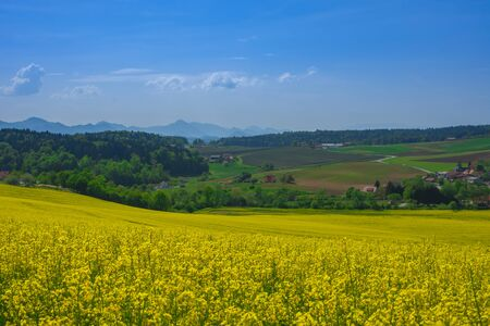 Slovenian countryside in spring with flowering rapeseed field and green nature, in Slovenia