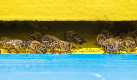 Close up of bees in the hive, selective focus