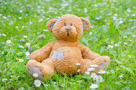 Cute little teddy bear standing on the grass in the park 免版税图像