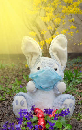 Easter 2021 concept during pandemic with Easter bunny wearing a medical mask and colorful spring flowers in the garden. Selective focus