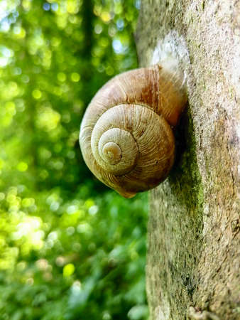 Snail shell on a tree in the forest, in summer, closeup.