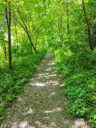 Path in the forest, in sunny summer day Banque d'images