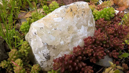 sedum with raw agate mineral