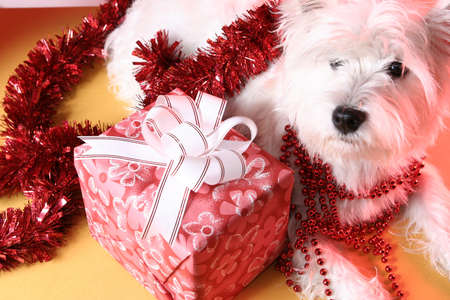 Cute white puppy with present and snowflakes.  photo