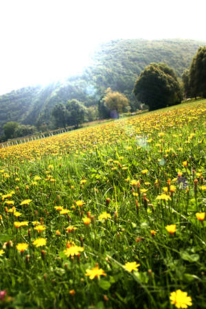 Nature landscape with yellow flowers field and mountains Stock Photo - 4019952