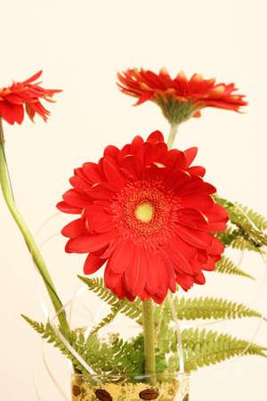 daisys: Bouquet of fresh gerber daisys.