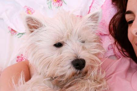 westie: Westie sleeping next to woman in bed .