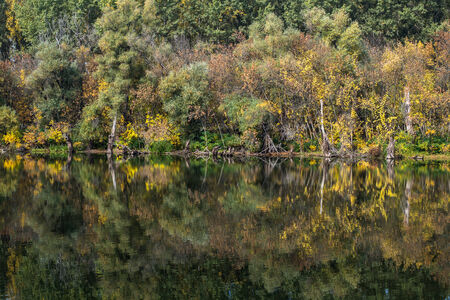 still water: Colorful autumn forest reflecting in still water of a river Stock Photo