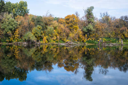 still water: Colorful forest reflecting in still water