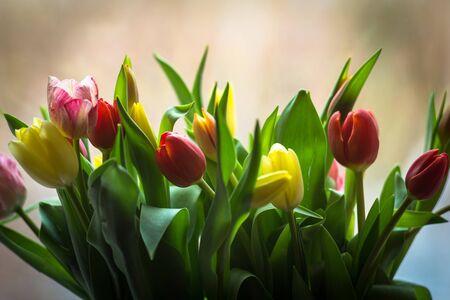 tulipan: PÄ™czek tulipanów w sunlight Zdjęcie Seryjne
