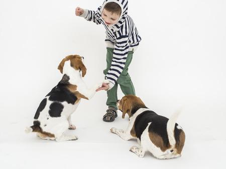 obediencia: Formaci�n Boy obediencia a perros beagle
