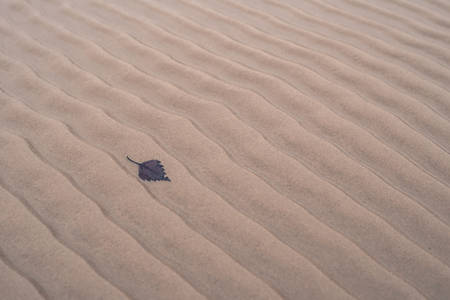 fallen leaf: Waveshaped sand and fallen leaf on beach in winter Stock Photo