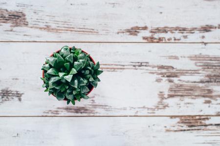 agave: planta de agave verde en bote de color rojo sobre la mesa de madera de la vendimia
