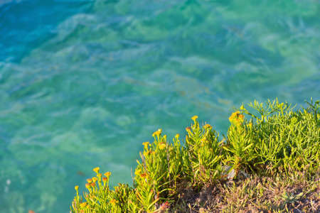 littoral: littoral cliff vegetation  over sea background Stock Photo