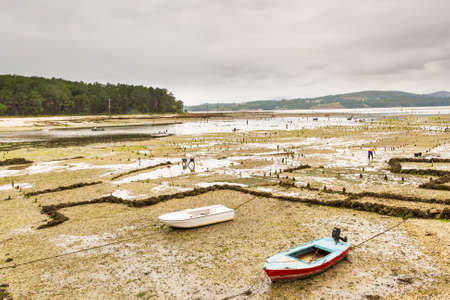 clam beds: Sandy beds of clam aquaculture parks in Carril at low tide