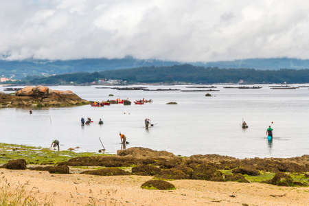 Clam fishermen on Sinas beach in Vilanova de Arousa Stock Photo
