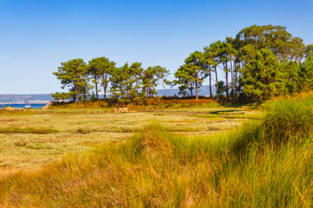 Pine trees and vegetation of Salinas marsh in Arousa Island