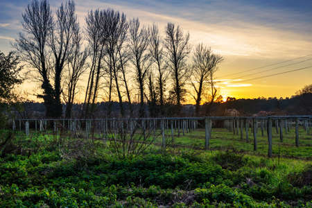Vineyards and trees at autumnal sunset in Ponte Arnelas village farmlands, Vilanova de Arousa town