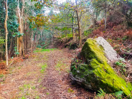 Moss on a rock and leaf litter covered path in the autumn forest Archivio Fotografico
