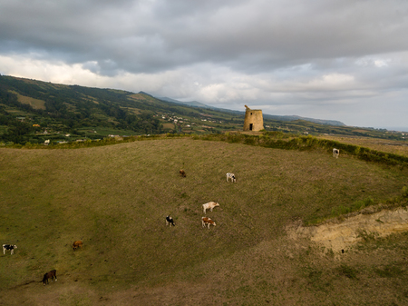 Drone view of typical azores landscape coastal with cows in a rural aerial view. Bird eye view, aerial panoramic point of view. Portugal tscenic destination. 版權商用圖片 - 122978605