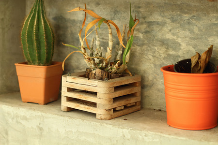 Potted plants for home decoration Modern Style photo
