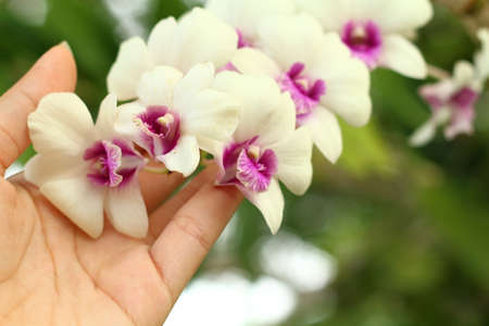 white orchids: Hands are holding a bunch of white orchids. Stock Photo