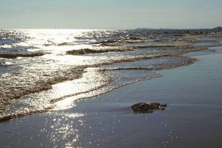 olas de mar: Las olas del oc�ano
