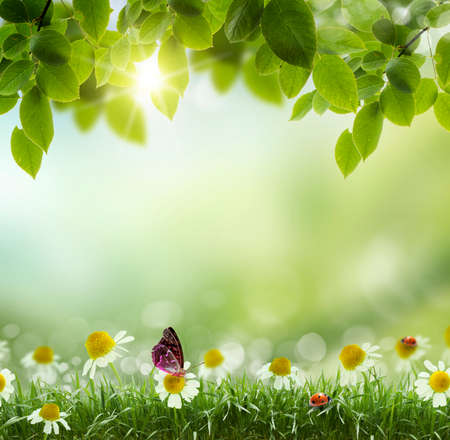 春夏のシーズンが後ろに草と青空で、自然の背景を抽象化または 写真素材