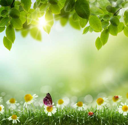 verano: Temporada de primavera o el verano la naturaleza de fondo abstracto con hierba y cielo azul en la parte posterior Foto de archivo
